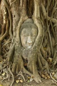 9001924-kamiea--buddy-ga--owy-w-drzewie-kataloga-w-ga--a-wnych-ayutthaya-jest-starej-stolicy-tajlandii